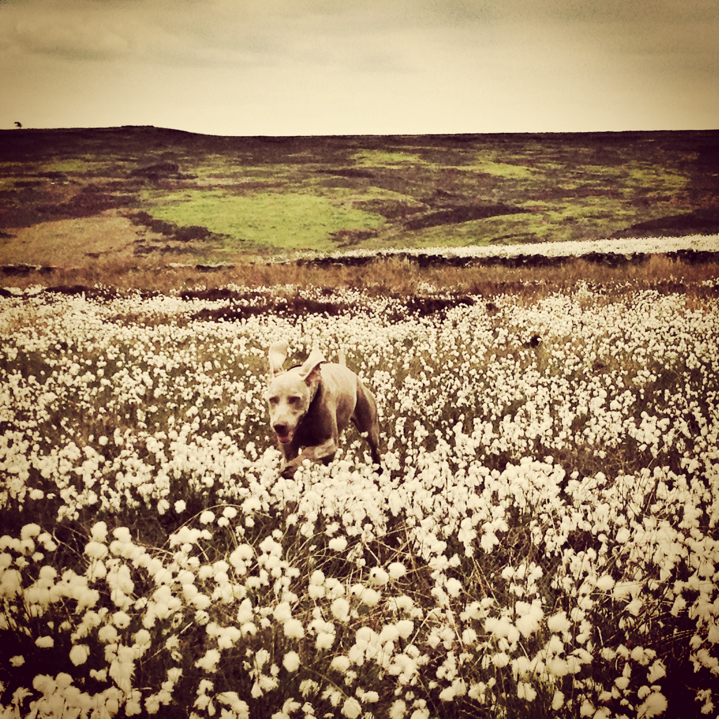 Sprocket's Adventures on the moors.