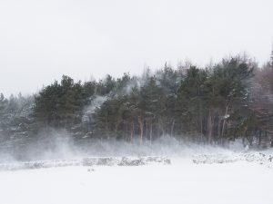 Snow blowing through the forest
